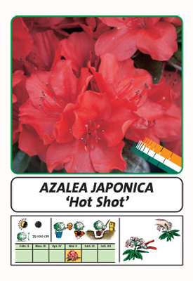 Wuloplant: specialiteit Rhododendron